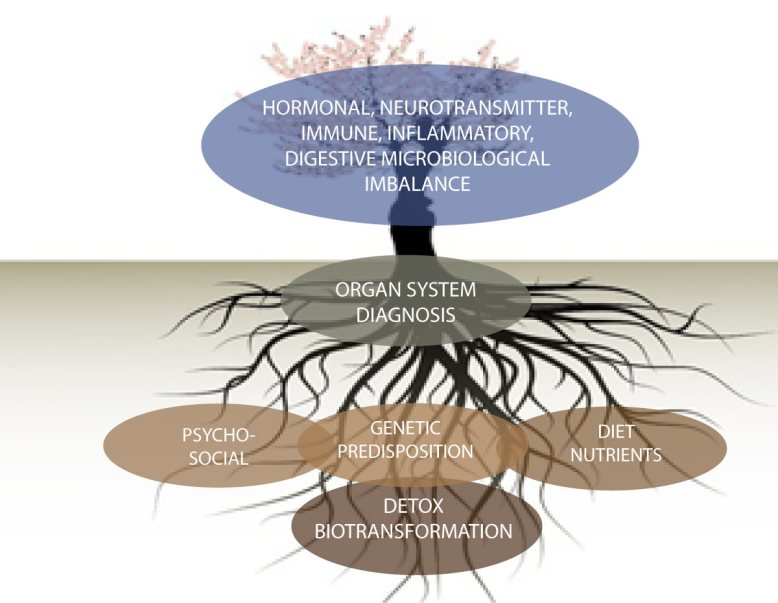 functional_tree_new